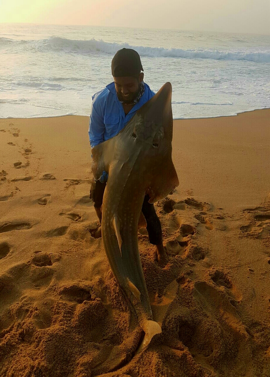 1.72m Sandy on a macky head and cutlets just north of Durban, using the Daiwa BG6500 and 40lb Daiwa