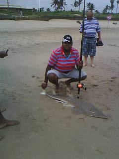 Sandshark. Caught on the 16/03/2013 on Durban beachfront. Measured lenght of 150cm. Was originally t