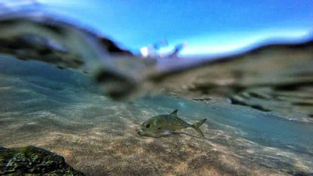 Some underwater pics of the weekends spinning adventure along the KZN coastline. baby bigeyebaby bla