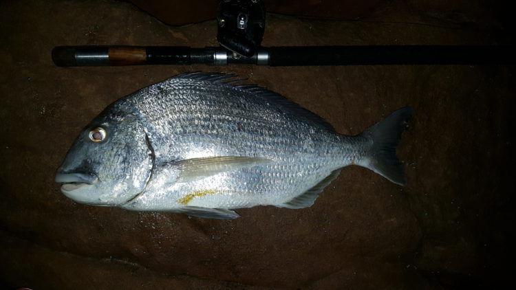 Stumpie caught on Occi – 4.2 kgs. 20170706_203331